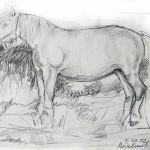 koń kobyła