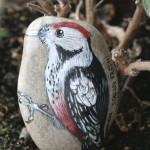 dzięcioł, ptak, ornitologia